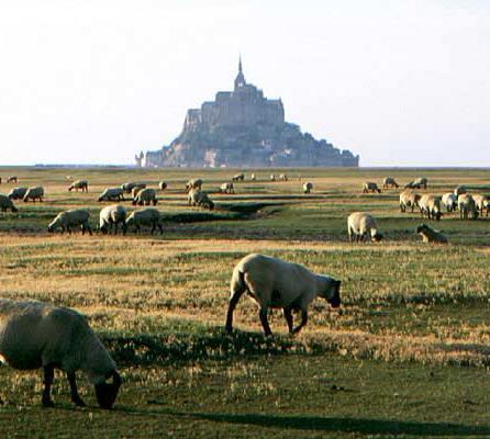 043_mont-Ssint-michel-&-moutons