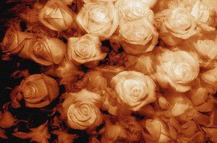 069_flowers