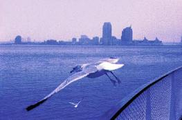 011_fly_seagul