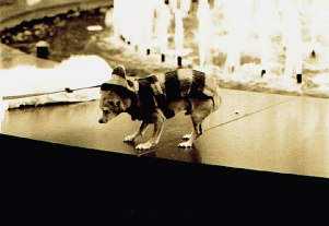 022_tout_petit_chien