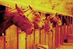 023_parole_de_cheval