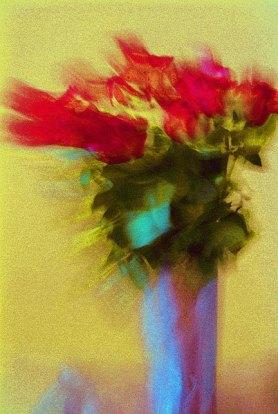 027_roses