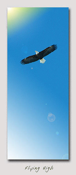 029_eagle