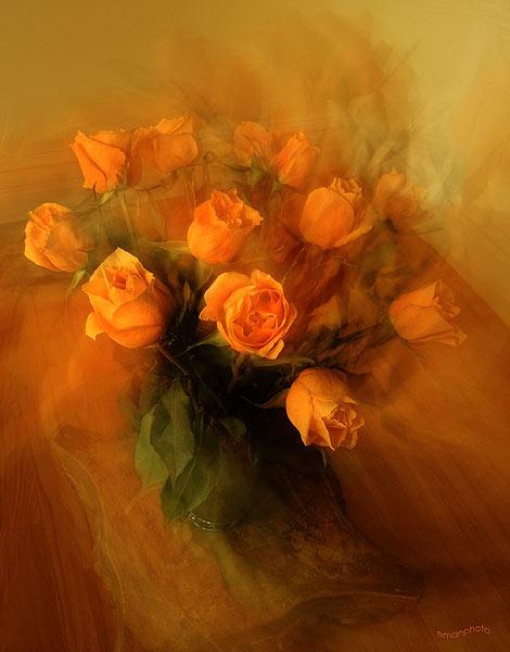 030_dancing_roses