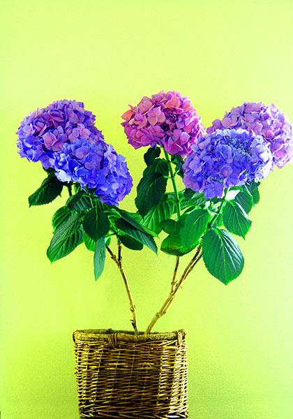 032_flower_pot