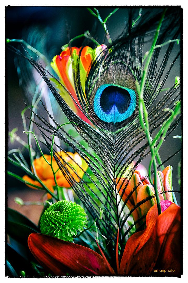 DSC_2325_Peacock_Feather_Nik_1080