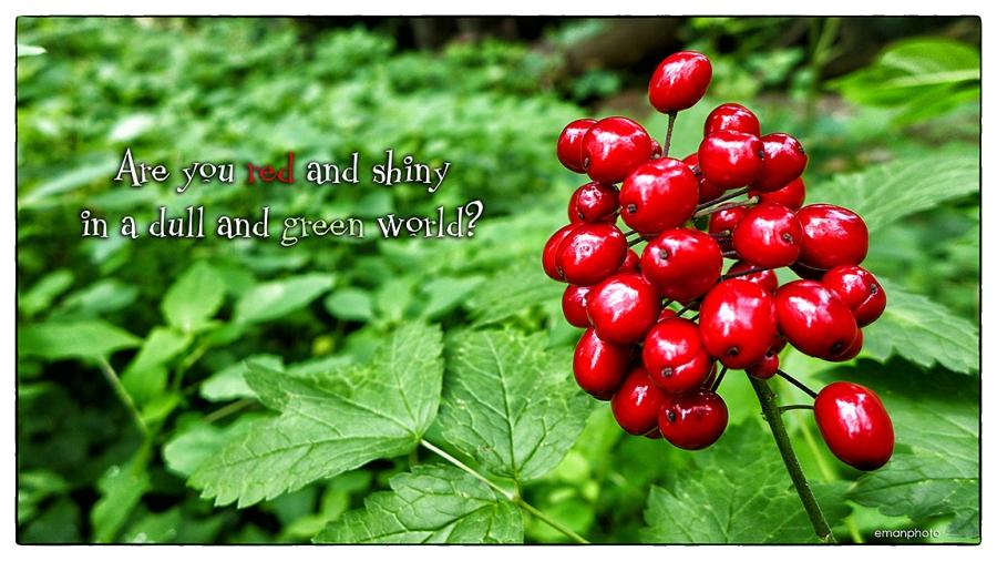 P1140926_Red & Shiny_w