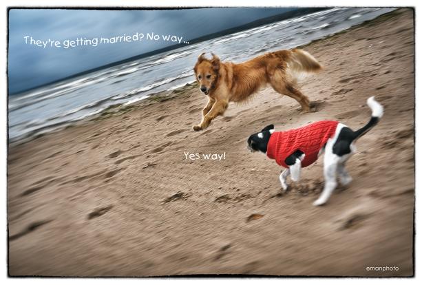 DSC_1912_Dogs_Running_Text_w