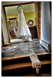 DSC_1566_Pooch & Dress_BB