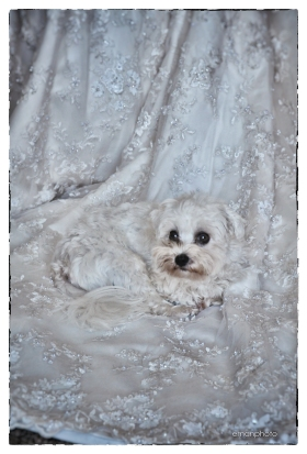 DSC_1652_Pooch & Gown_BB