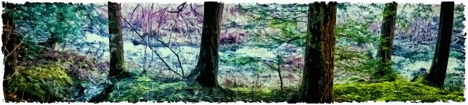 DSC01172_Le_Ruisselet_Dans_La_Forêt_Borders