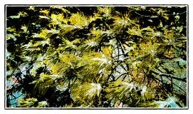 DSC01351_Snow_On_Pine_Needles_Borders