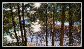 DSC01935_Seven_Pinetrees_in_a_Row_Borders