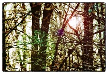 DSCF0012_Funky_Trees_Borders