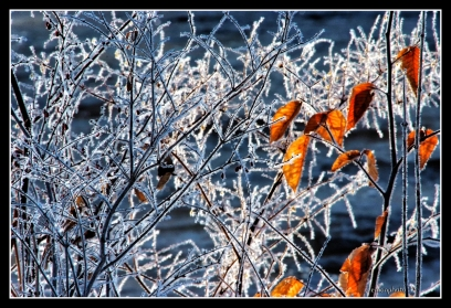 DSCF0043_Orange_Leaves_Frost_Borders