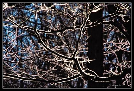 DSCF0055_Tree_Silhouette_Borders