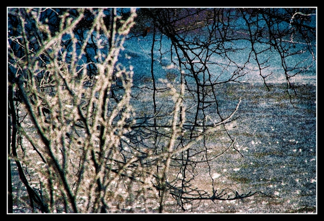 DSCF0066_Frozen_by_the_River_Borders