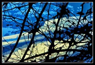 DSCF0079_Couleurs_de_L'hiver_Borders
