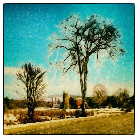 P1600441_Broccoli_Tree_15.2 x 15.2_Borders