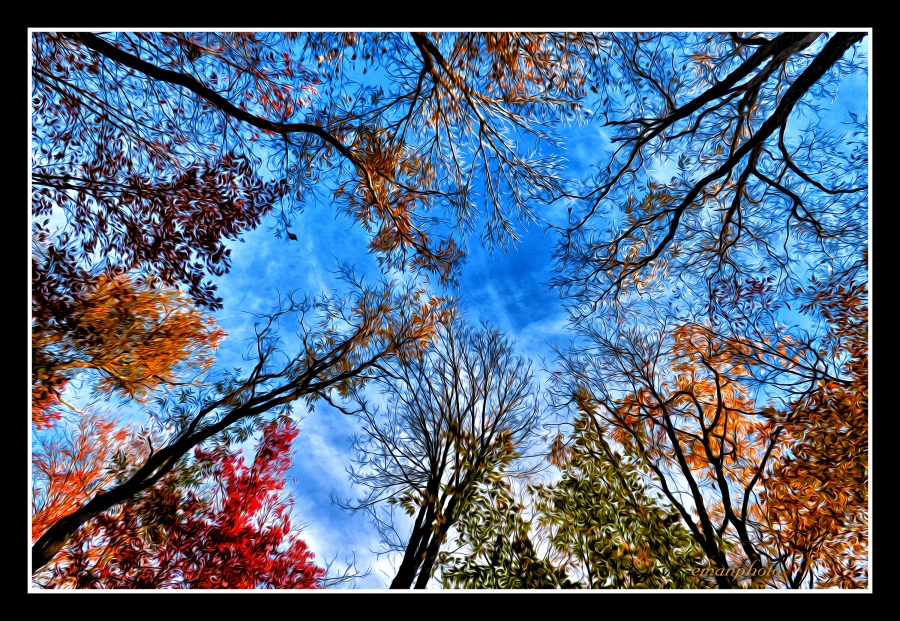 DSC_3272_Fall_Tree_Canopy_Borders.jpg