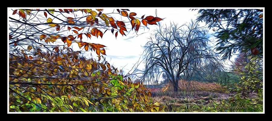 DSC_3341_L'arbre_Solitaire.jpg