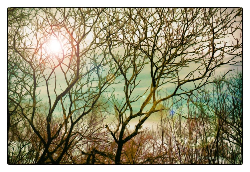 DSC00054_Sun_In_The_Sumac_Trees_Borders.jpg