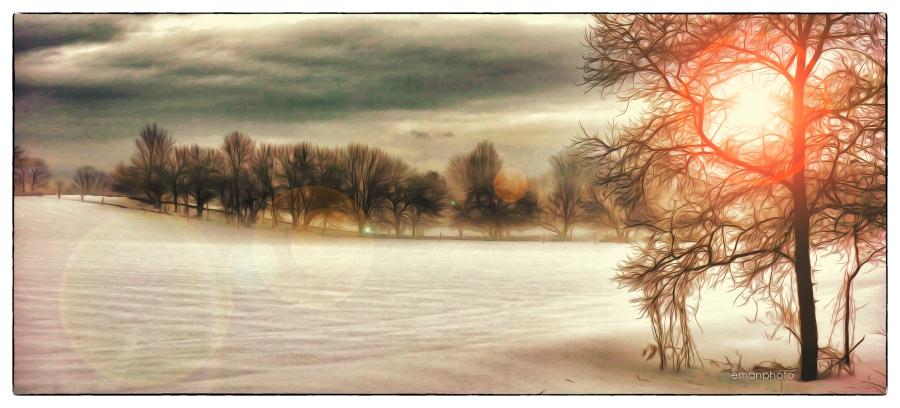 DSC00097_Le_Champ_Et_La_Ligne_D'arbres_Borders