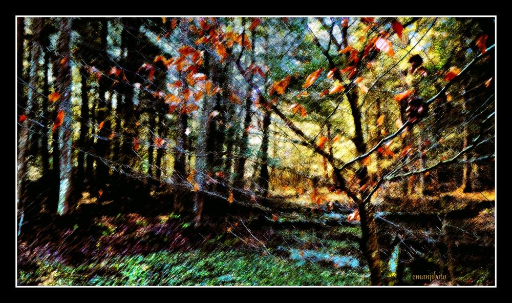 DSC00943_L'arbre_Coloré_Borders