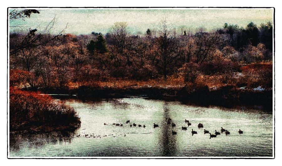 DSC00997_Geese & Ducks_Borders