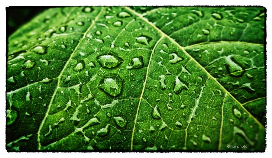 P1040032_Summer_Rain