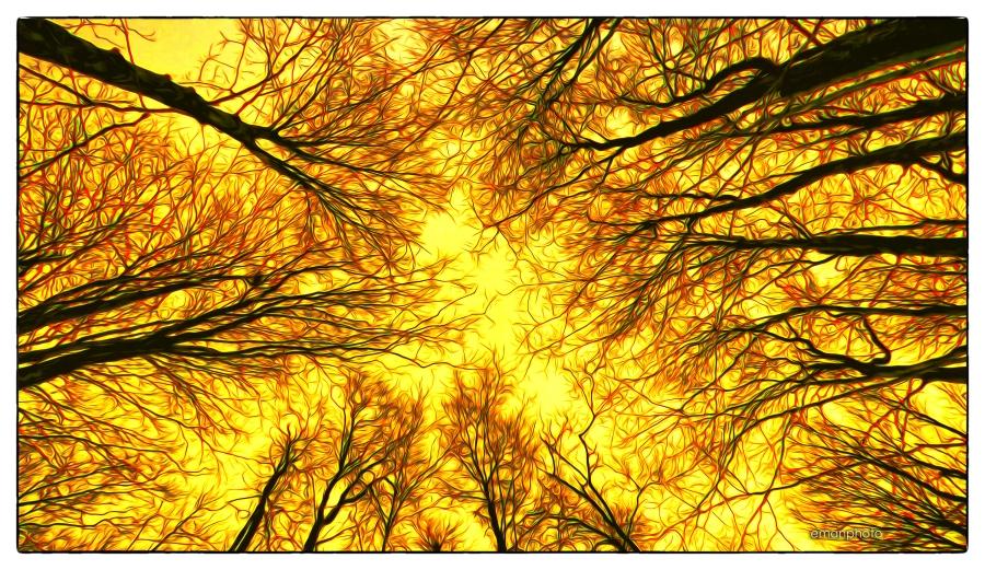 P1040106_Top_of_Trees_Borders