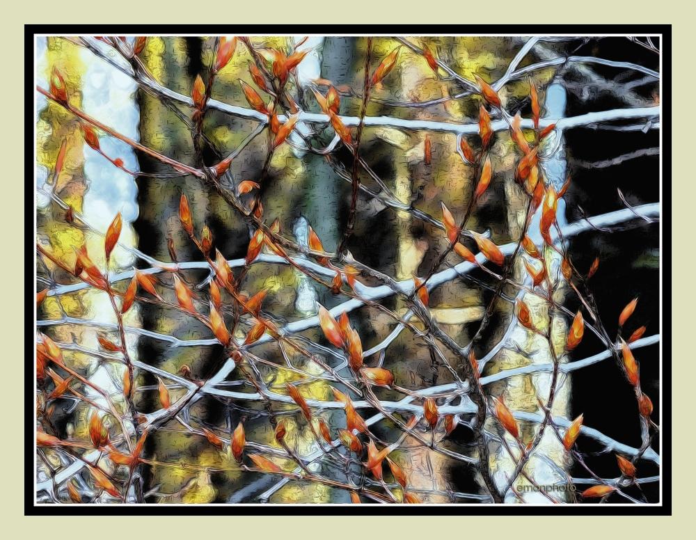 P1040355_Budding_Leaves_Borders.jpg