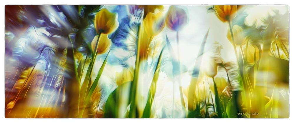 P1040489_Tulips3_Borders_