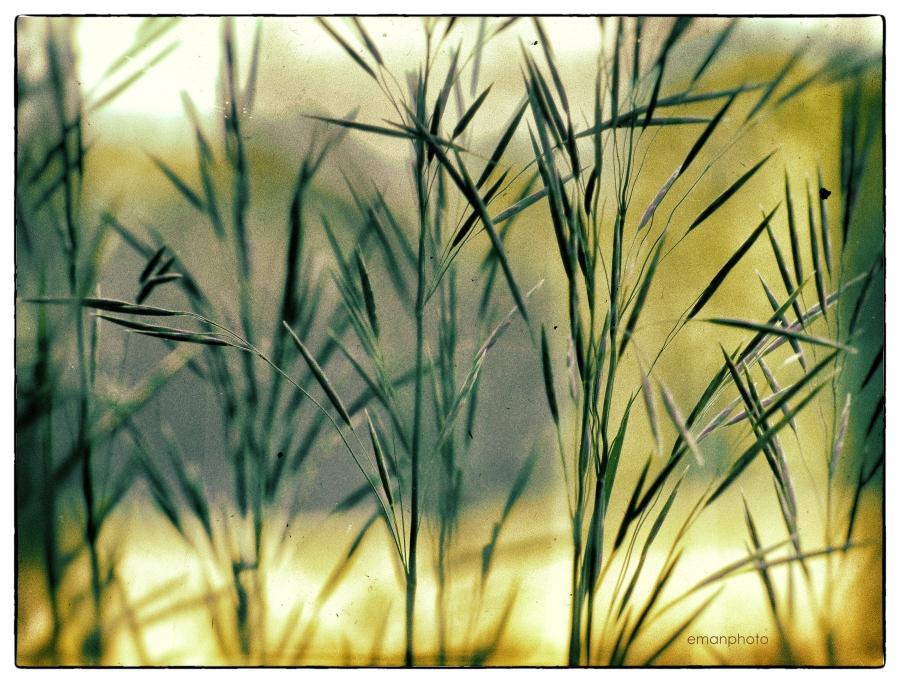 P1050317_Les_Grandes_Herbes.jpg