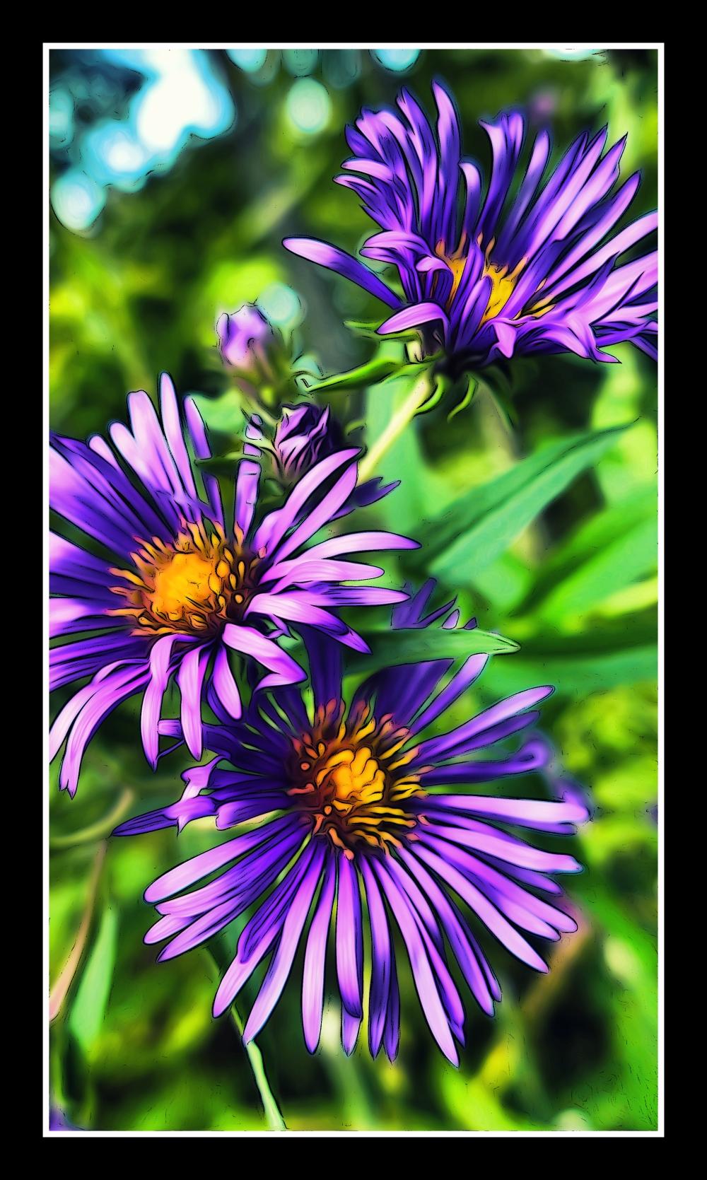 P1060674_Three_Flowers_Borders.jpg