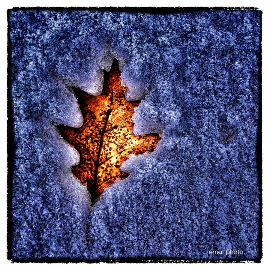 P1120209_Dead_Leaf_in_Snow_Nik_flat.jpg