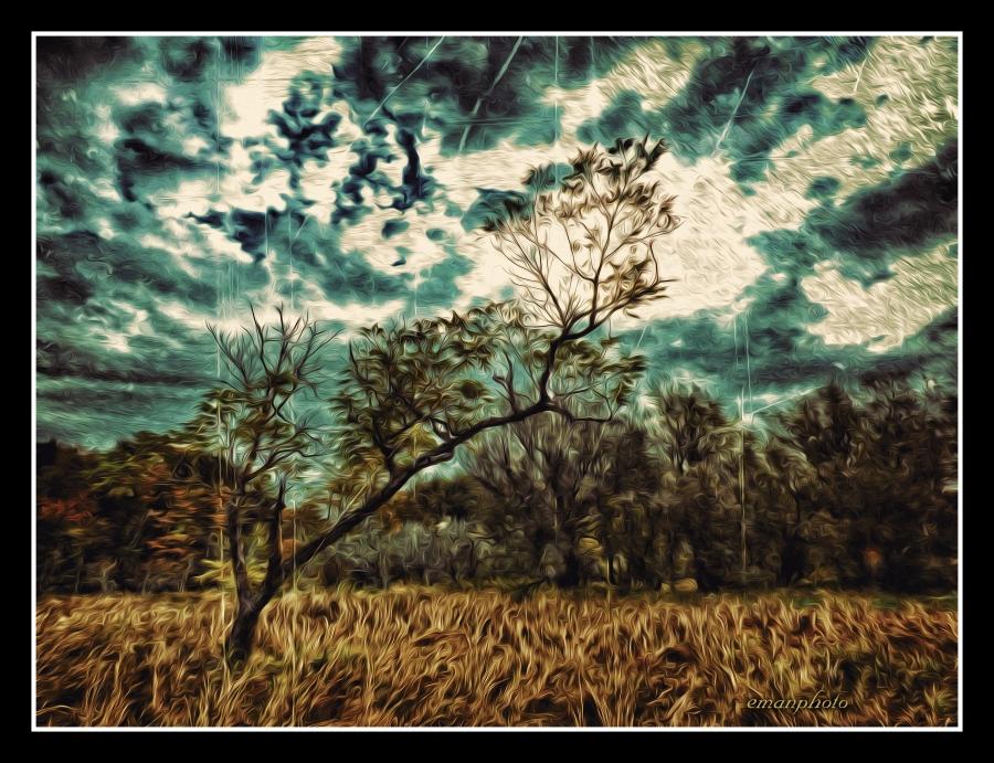 P1090212_Lone_Tree.jpg