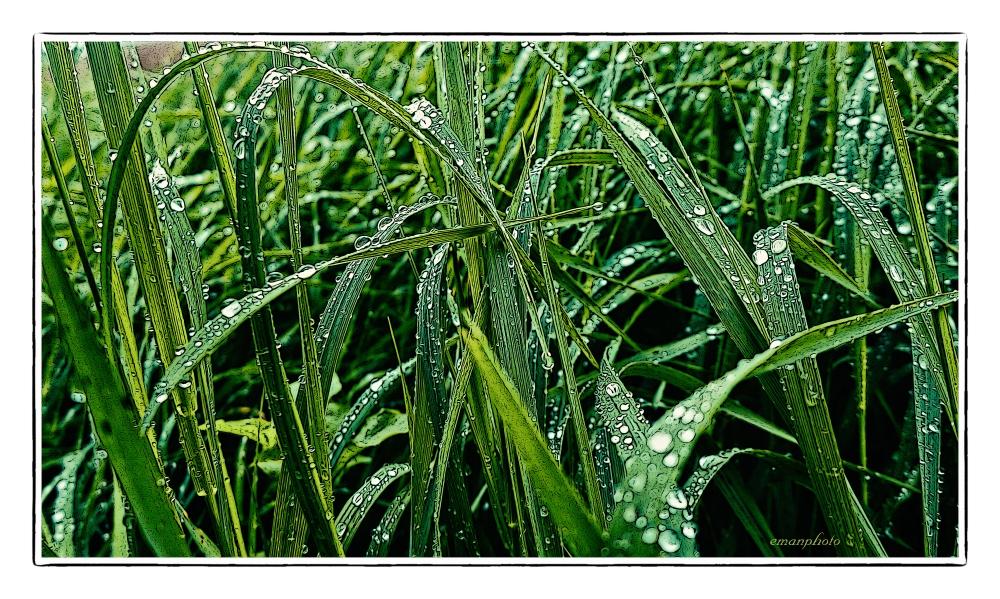 P1130933_Tall_Grass_Droplets_Borders