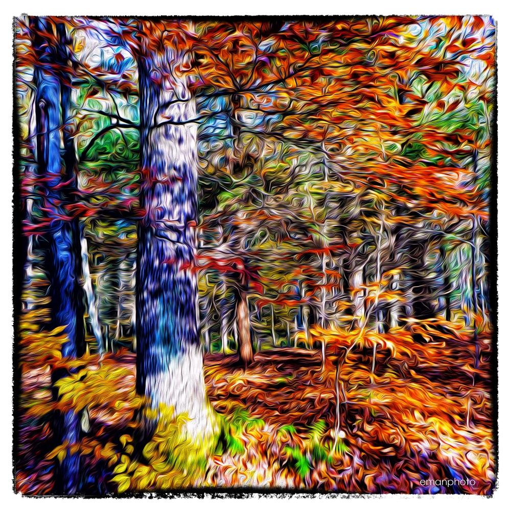 P1210316_Oak Tree_Forest_Park
